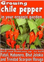 Growing chile pepper in your organic garden