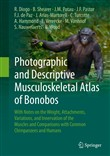 Photographic and Descriptive Musculoskeletal Atlas of Bonobos