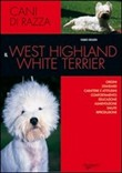 Il west higland white terrier