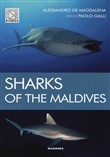 Sharks of the maldives