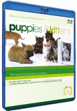 puppies & kittens (specia...