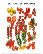 Phillips les Tomates
